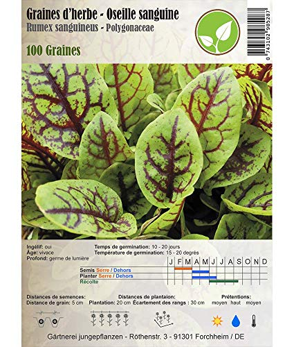 Graines d'herbe - Oseille sanguine - Rumex sanguineus/Polygeonaceae 100 graines