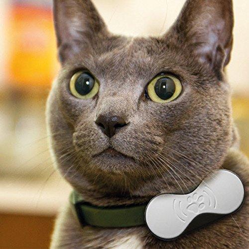 CAT Berlin C-CGP-1621 Carl Pet Tiertracker für Hunde und Katzen grau