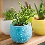 panniuzhe Bunte Kunststoff Blumentopf Sukkulente Töpfe Set von 5Für Home Office Garten Dekoration