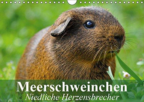 Meerschweinchen Niedliche Herzensbrecher (Wandkalender 2019 DIN A4 quer): Putzige Nagetiere aus...