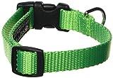 Sassy Hund Tragen 5/20,3x 25,4cm-14Neon Nylon Gurtband Halsband, klein, grün