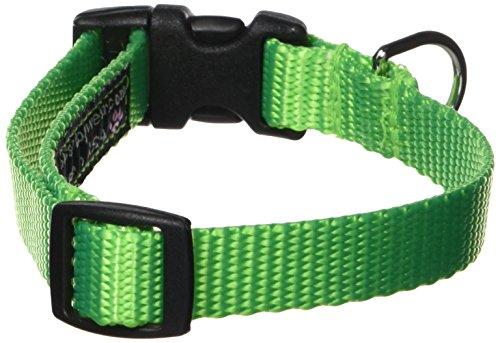 Sassy Hund tragen 5/20,3x 25,4cm-14Neon Nylon Gurtband Halsband, klein, grün -