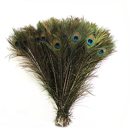 eal Natural Peacock Tail Feathers,10-12Inches by Celine lin (Kostüm Peacock Tail)