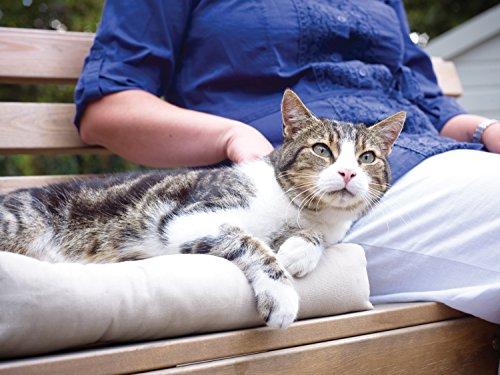PetSafe Petporte smart flap Mikrochip Katzenklappe -