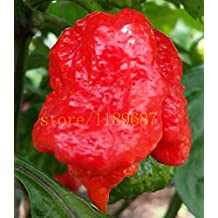 """1bag = 200 PC pimiento chile fantasma semillas de vegetales frescos rojos """"Carolina del Reaper"""" semillas de pimiento chile picante (Rare)"""
