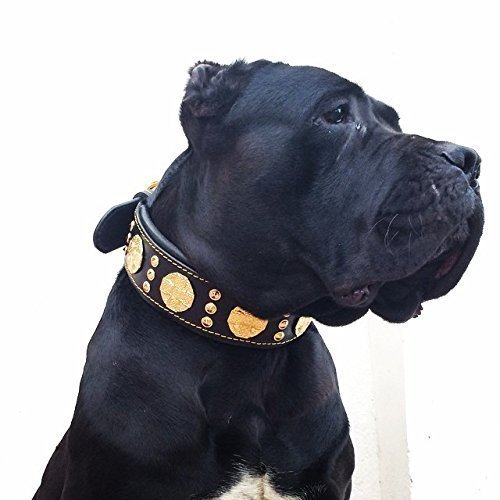 Bestia Maximus genuine leather dog collar, Large breeds, cane corso, Rottweiler, Boxer, Bullmastiff, Dogo, Quality dog collar, 100% leather, studded, L- XXL size, 2.5 inch wide. padded. Made in Europe!