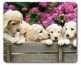 1art1 89301 Hunde - Labrador Welpen Im Garten Mauspad 23 x 19 cm