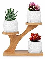 Idea Regalo - Innoter Vaso in ceramica bianca con vassoio in bambù, ideale per fiori e cactus Pattern 6