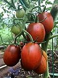Tomaten De-Barao Schwarz - 5 Samen