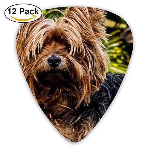 Shaggy Doggie Yorkshire Terrier Netter Hund Plektrum12 Stück Für E-Gitarre, Akustikgitarre, Mandoline und Bass