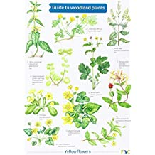 Guide to Woodland Plants (Field Studies Council Occasional Publications)
