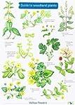 Guide to Woodland Plants (Field Studi...