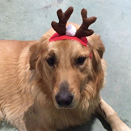 Gemini_mall® Weihnachten Kostüm Pet Katze Hund Geweih Hat Gap Haustier Hund Kleidung Rentier Hörner mit Kopfbedeckungen Puppy Doggy Kätzchen Haarreifen, weihnachtliches Halsband Weihnachts ()