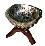 SET: Abalone shell 10+ cm (abalone shell 4-5 Inch) - Wooden Tripod Cobra 4Inch (cut out one piece of wood)