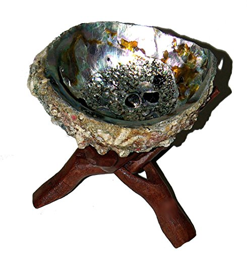 set-abalone-shell-10-cm-abalone-shell-4-5-inch-wooden-tripod-cobra-4inch-cut-out-one-piece-of-wood