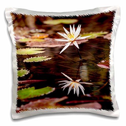 danita-delimont-alida-latham-lilies-africa-liberia-monrovia-lily-in-bloom-on-the-du-river-16x16-inch
