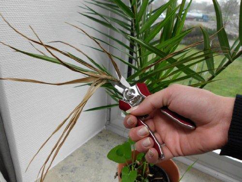 connex-mini-trimmerschere-blumenschere-floristikschere-rosenschere-gartenschere-flor70368-3