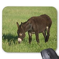 Wild Donkey Mouse Pad