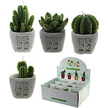 4 piezas Mini vela Cactus en maceta de piedra