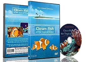 DVD Poissons Tropicaux – Poissons-clown de l'océan tropical