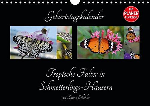 Geburtstagskalender Tropische Falter in Schmetterlings-Häusern (Wandkalender 2019 DIN A4 quer): Artenbeschreibung von tropischen Schmetterlingen (Geburtstagskalender, 14 Seiten ) (CALVENDO Wissen)