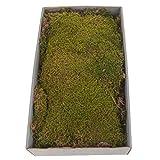 Naturdeko MOOS - 500 gr. - Dekomoos - Naturdeko - ideal zum Basteln