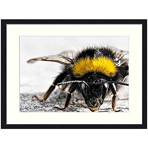 Bumble Bee–Legno Massello Cornice Stampa Artistica (50,8x 35,6cm)