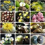 15pcs carnosas Lithops piedras semillas de vida semillas de flor de Cactus