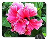 Gaming-Mauspads, Mäusematte, Gänseblümchen-Blume blühende Pflanze Frühlings-Sommer-Blumenblätter 2