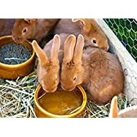 Bio Blooms Pellet Rabbit Foods (1KG) Bio_253A