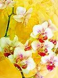 CALVENDO Puzzle Sonnige Orchideen 1000 Teile Lege-Größe 48 x 64 cm Foto-Puzzle Bild von Alaya Gadeh