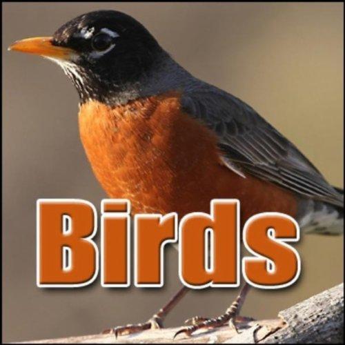 Crow Bird Call (Bird, Crow - Black Raven: Four Calls, Animal Birds)