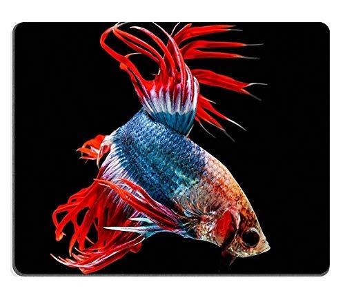 Mauspad-Gaming-Mauspad Naturkautschuk-Mäusematte Siamesischer Kampffisch auf schwarzem Hintergrund M0A01926 isoliert -