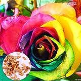 Begorey Garten-30/50 stück Rosensamen Edelrose Blumensamen Regenbogen Rose Bunte Blumen Samen für Ihr Garten Balkon Lange Blütezeit winterhart