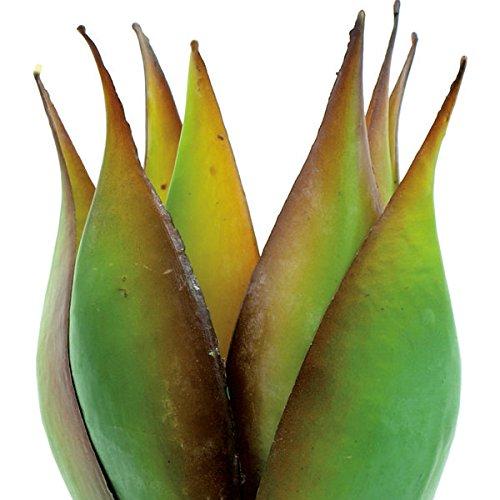 artplants – Deko Lotus Agave, 8 Blätter, grün-braun, 35 cm – Künstliche Sukkulente/Plastik Agaven Kaktus