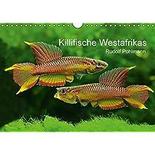 Killifische Westafrikas (Wandkalender 2017 DIN A4 quer): Faszination der Farben: Die Welt außergewöhnlicher Aquarienfische. (Monatskalender, 14 Seiten ) (CALVENDO Tiere)