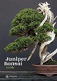 #4: Juniper Bonsai Guide