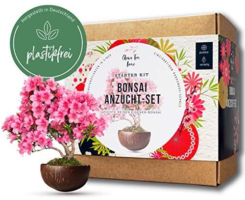 Dein eigener Bonsai in einer Kokosnuss-Pflanzschale - Bonsai Starter Kit - ökologisches Bonsai Kit - 2 einzigartige Bonsai Bäume im Bonsai Anzuchtset & Samen - ideal für Anfänger, tolles Geschenk