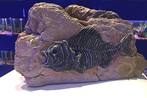 Piranha Fossil Rock Cave Aquarium Ornament-Prähistorische Fisch Tank