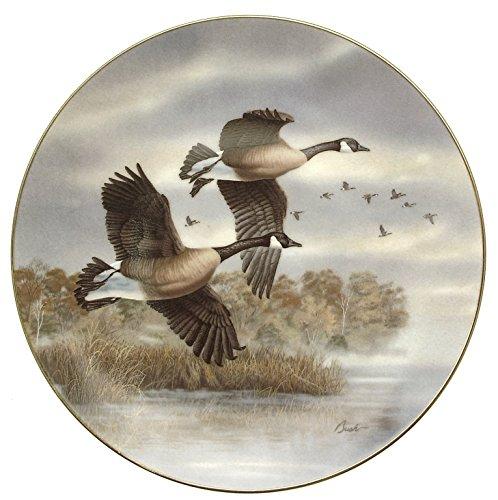 golden-flight-canada-oche-darrell-bush-birds-of-the-north-hj312