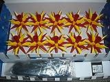 Herrnhuter Sterne Sternkette A1s gelb/rot, Parallelschaltung + Trafo für Innen und Außen