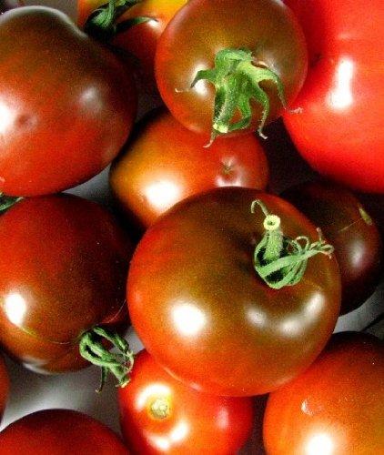 Famous Hungarian purple Tomato \