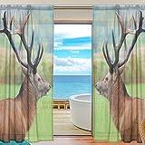 DEYYA Fenêtre sur Mesure Lion Ethnique Panneaux Voilage 55 « x84 », Fenêtre Art Moderne Treatt Panneau Collection pour Salon Chambre Maison Decor 55x78x2   (en) Multicolore