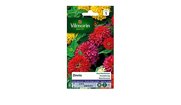 Vilmorin Sachet Graines Zinnia Fleur Monstrueuse Amazon Fr Jardin
