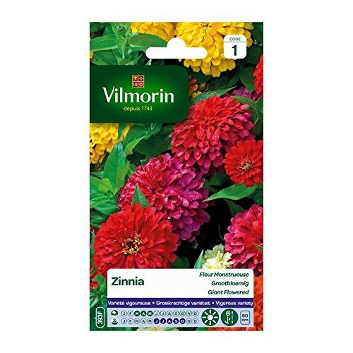 Vilmorin - Sachet graines Zinnia Fleur Monstrueuse