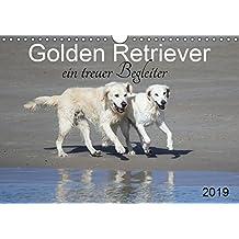 Golden Retriever ein treuer Begleiter (Wandkalender 2019 DIN A4 quer): Weiße und goldene Retriever (Monatskalender, 14 Seiten ) (CALVENDO Tiere)