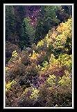 Himalayan Foliage Landscape Artwork by G...