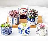 CherryTreeHouse - Set di 6 Mini vasi per Piante/Fiori, Piante grasse, Cactus, Erbe o Aloe, Decorazione per casa, Ufficio, Decorazione da Tavolo, Regalo di Compleanno