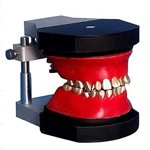 ZQDL Zahnärztliche Kieferorthopädie Ausbildung Operation 3D Modell Luftfahrt Aluminium Material Korrektur Zahnarzt Fähigkeiten 1 Stück Medizinische Lehre Spielzeug