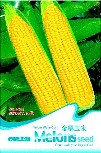 Heirloom jaunes Waxy Corn Tasty Semences Potagères douces, emballage d'origine, 10 graines / Pack, Organic Fragrant B023
